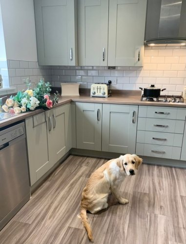 Cranbrook Sage kitchen with woodern worktops and flooring featuring stainless steel handles. A dog is sat on the floor